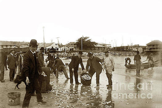 California Views Mr Pat Hathaway Archives - Monterey locals collecting Smelt on the beach near the Custom Ho