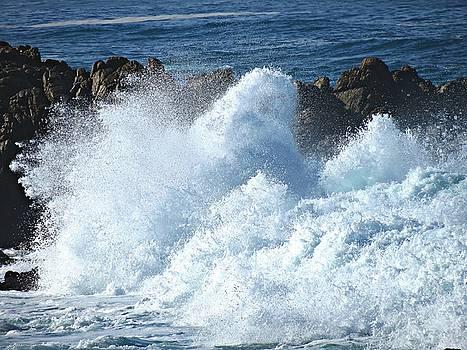 Monterey Peninsula 5 by David Norman