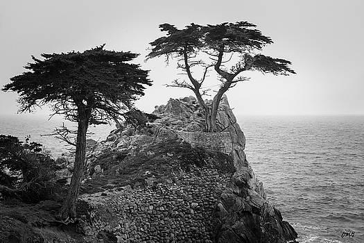 Monterey Peninsula II BW by David Gordon