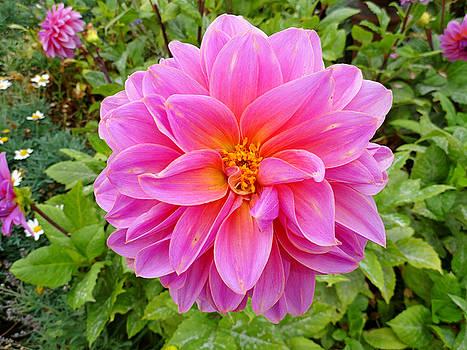 Robert Meyers-Lussier - Monterey Pink