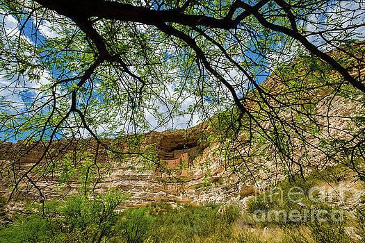 Montezuma Castle Dwelling by Raul Rodriguez
