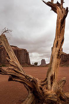 Monument Valley deadwood by Roy Nierdieck