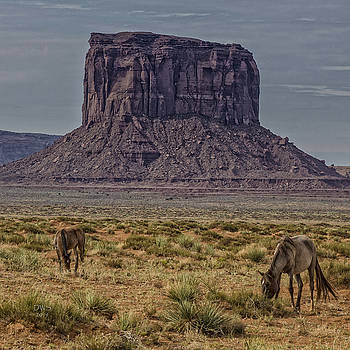 Monument Valley Mare and Foal by David W Schafer