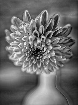 Moody Black And White Dahlia Close Up by Garry Gay