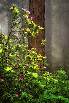 Moody Forest  by Nicki Frates