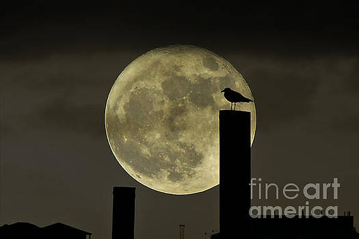 Moody Moonrise by Kelly Nowak