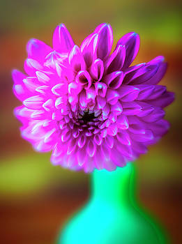 Moody Pink Dahlia Close Up by Garry Gay