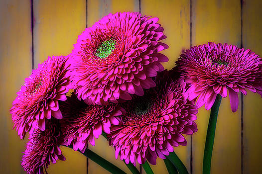 Moody Pink Mums by Garry Gay