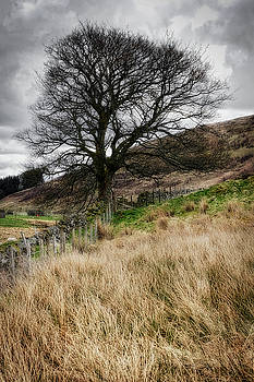 Jeremy Lavender Photography - Moody scenery in Central Scotland