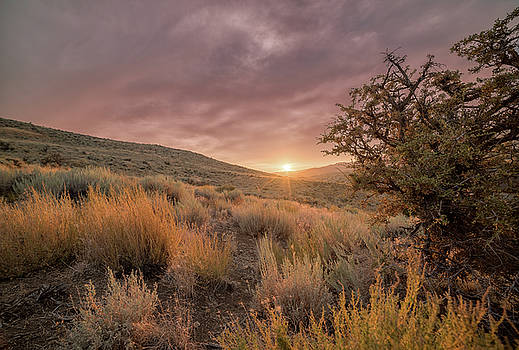 Moody Summer Sunset in the High Desert of Nevada with Sagebrush and Tall Grass by Brian Ball
