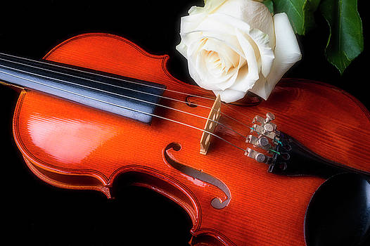 Moody Violin And Rose  by Garry Gay