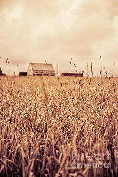 Edward Fielding - Moody Wheat Field Prince Edward Island