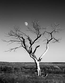Mary Lee Dereske - Moon and Memory at Bosque del Apache N M