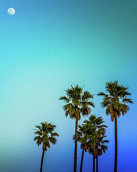Moon and Palms by Christopher Petro