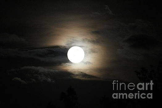 Moon by Athala Carole Bruckner
