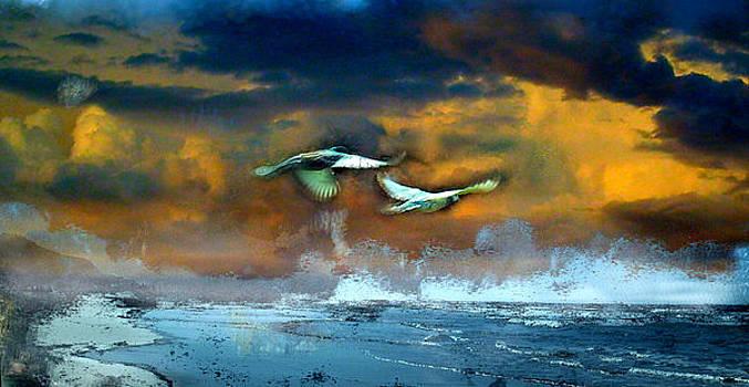 Moon Birds by Kathleen Storey