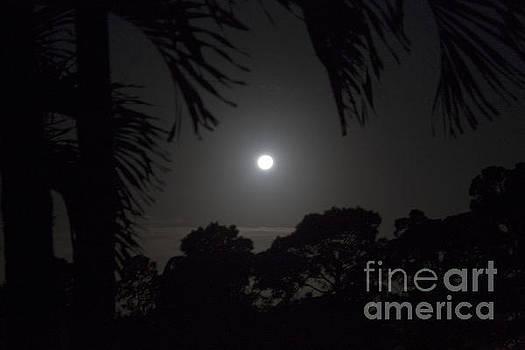 Moon Dance by Keri West