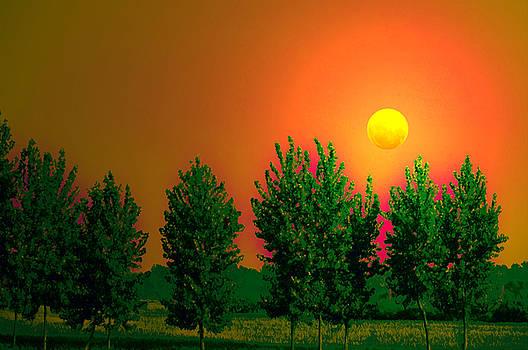 Bliss Of Art - Moon essence