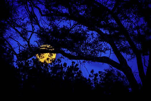 Moon Harvest by Mark Andrew Thomas