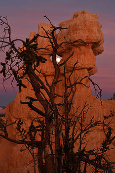 Moon in Bryce by Cadence Chinle