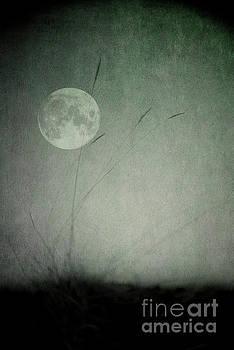 Moon in the dark by Priska Wettstein