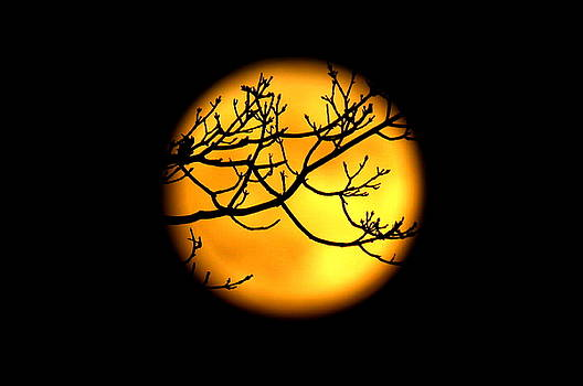Moon in the Trees by Suzanne DeGeorge