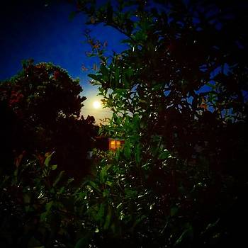 #moon #moonlight #nature #photooftheday by Sean Kalimi