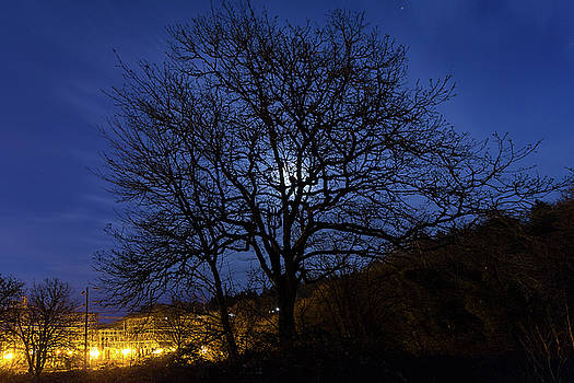Moon Rise Behind Tree Silhouette at Night by David Gn