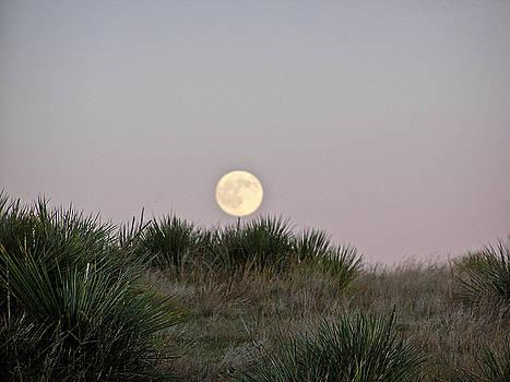 Moon Rising by Kelli Chrisman