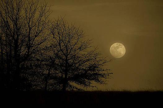 Karen M Scovill - Moon Scape