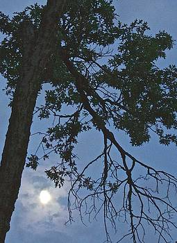 Moon through Tall Tree by Janet K Wilcox