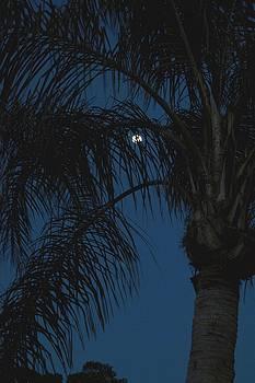 Moon thru the Palms by Sue Houston