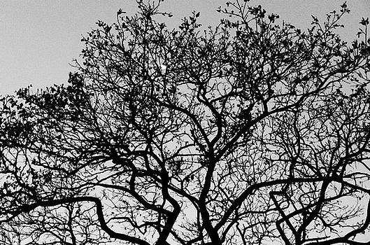 Moon Tree by Timothy Leonard