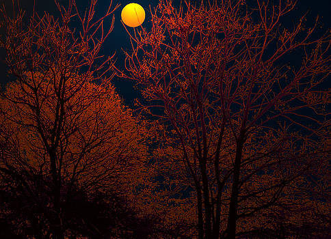 Bliss Of Art - Moon Trees and the Night