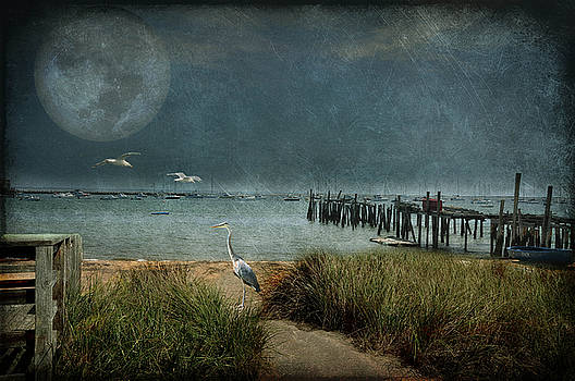 Moondance by Marie  Gale