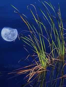 Moondrop by Chrystyne Novack