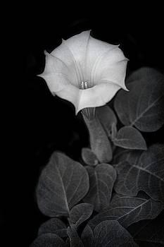Nikolyn McDonald - Moonflower - Black and White