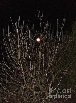 Moonlight Branches by Diamante Lavendar