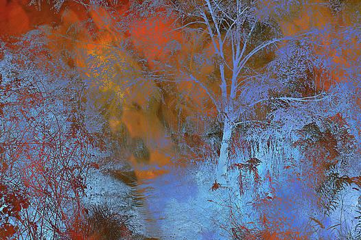 Jenny Rainbow - Moonlight Forest