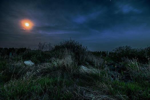 Moonlight by Melanie Janzen