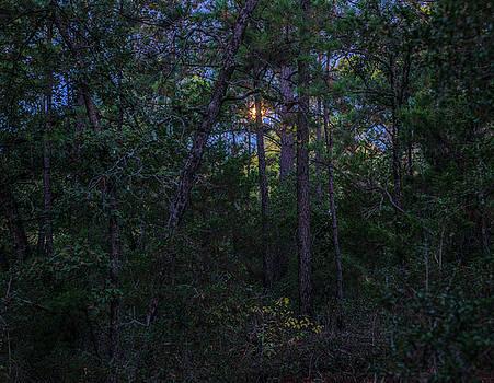 Billy Moore - Moonlight Pines