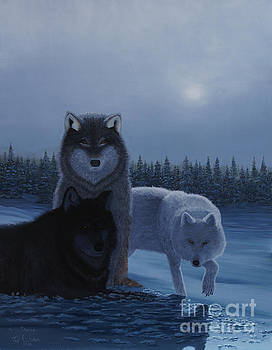 Stanza Widen - Moonlight Wolves