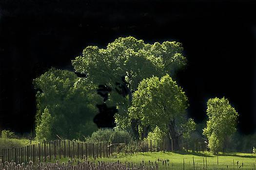 Moonlit Forest by David Kehrli