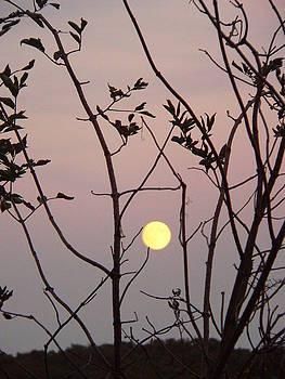 Moonlit Frame by Darren Kearney