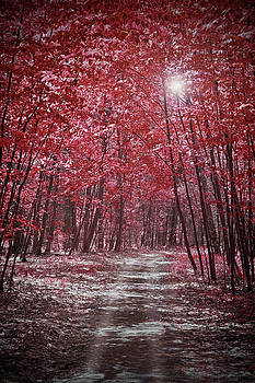 Moonlit Road Through Red Forest  by Brooke T Ryan