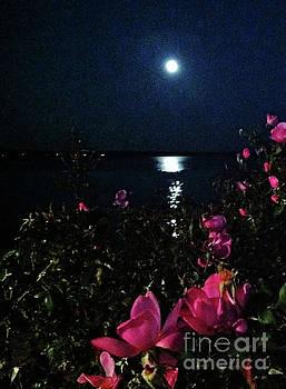 Moonlit Roses by Jeannie Allerton