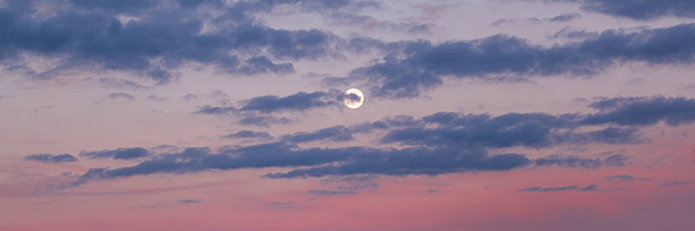 Moonrise In Pink Sky by D K Wall