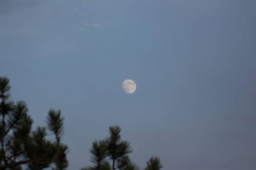 Moonrise by Jodi Vetter