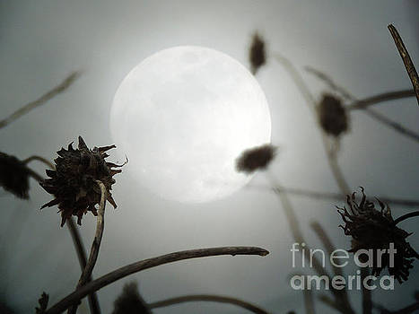 Moonrise by Robert Ball