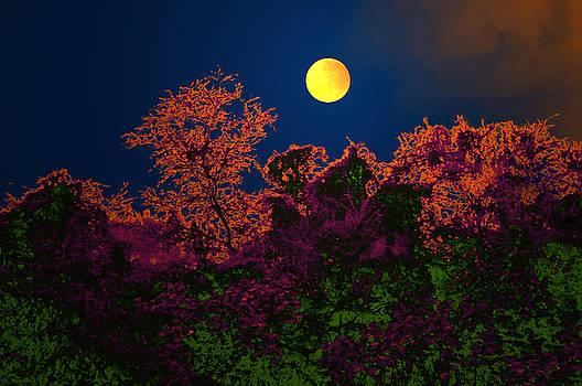 Bliss Of Art - Moon
